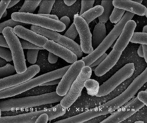 human microbiome nutritionist Glendora